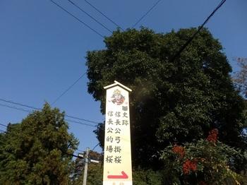069-1-信長公弓掛的場桜.JPG
