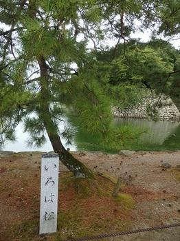 彦根城石垣いろは松295.JPG