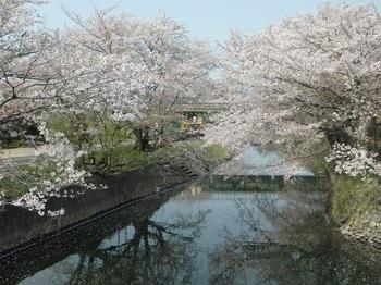 高田川堤防128.JPG