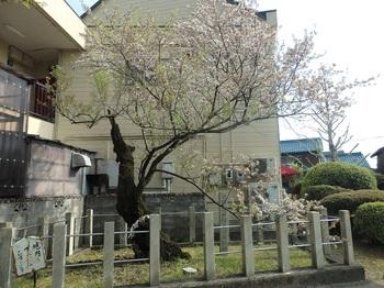 手力雄神社134.JPG