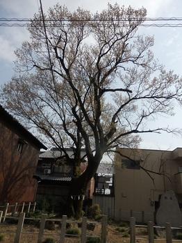 手力雄神社136.JPG